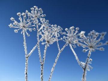Paisaje de invierno (01-12-2018)