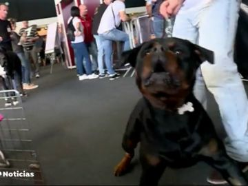 Una exposición da las claves para saber cómo tratar a los perros peligrosos
