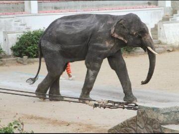 El elefante del zoo tailandés