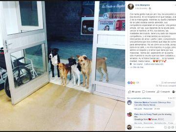 Perros en la puerta de un centro de salud