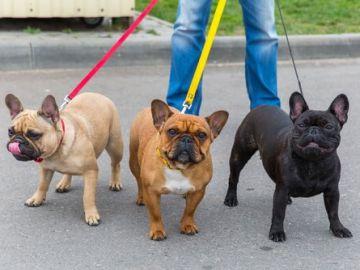 Perros paseando / Imagen de archivo