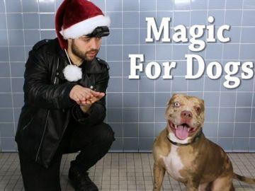 Magia para perros