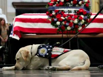 Sully, el perro del expresidente George Bush, regresa a la organización que se lo cedió para que superara la muerte de su esposa