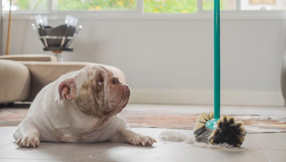 Un perro suelta pelo en casa
