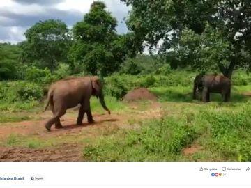 La elefanta rescatada Rana