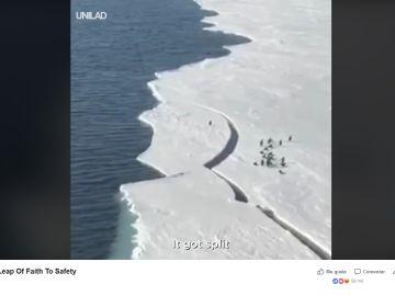 Un pingüino se queda a la deriva