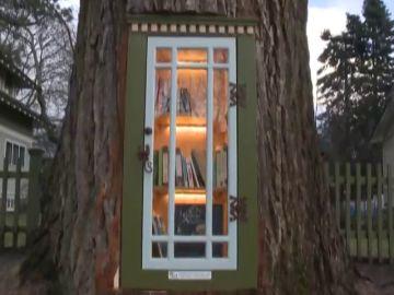 Una antigua encuadernadora de libros se le ocurre la idea de transformar un viejo árbol en increíble biblioteca