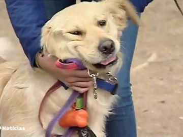 Una aplicación permite localizar a cuidadores de perros para cuando te vas de vacaciones