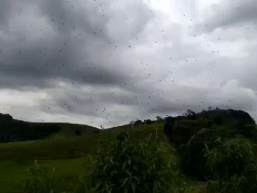 Una lluvia de arañas sorprende a los vecinos del sur  Brasil