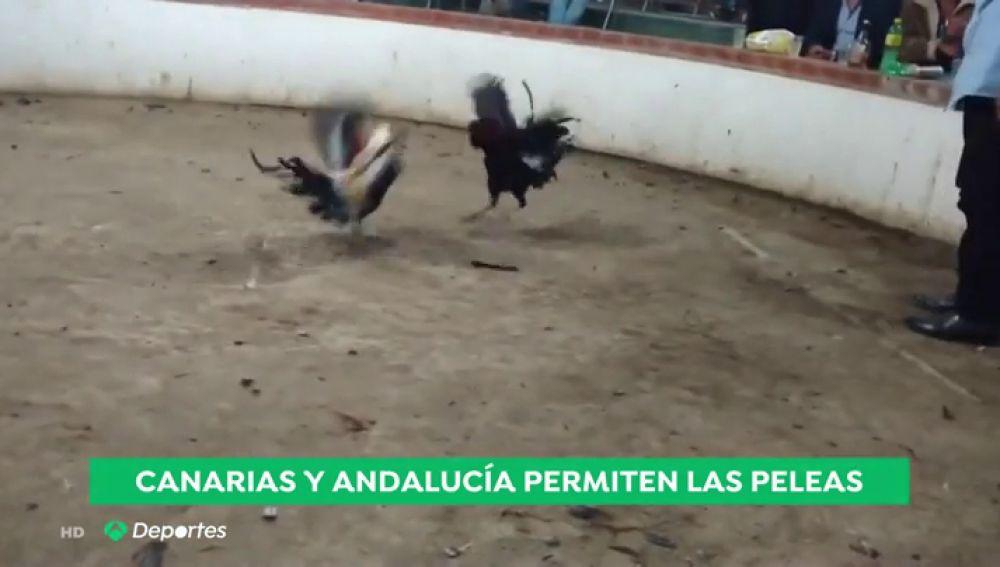 gallos_a3d