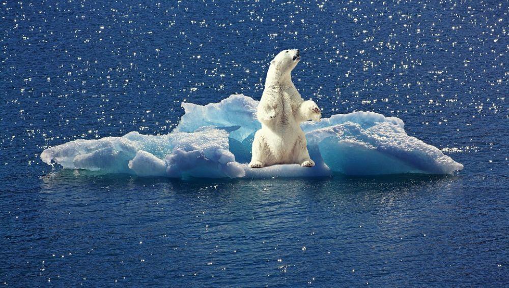 Oso polar (imagen de archivo)