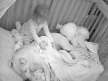 Una niña durmiendo junto a su pitbull