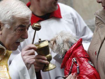 Bendición de animales en día de San Antón
