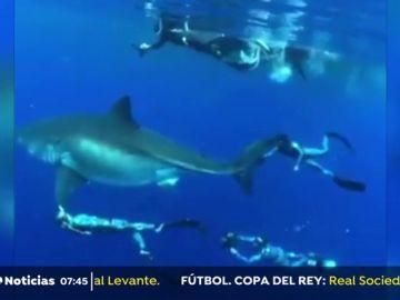 Localizado el tiburón blanco más grande del mundo