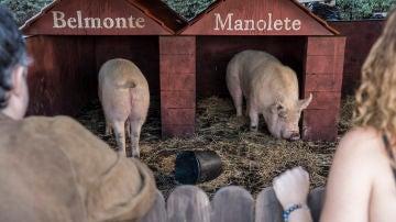 Belmonte y Manolete