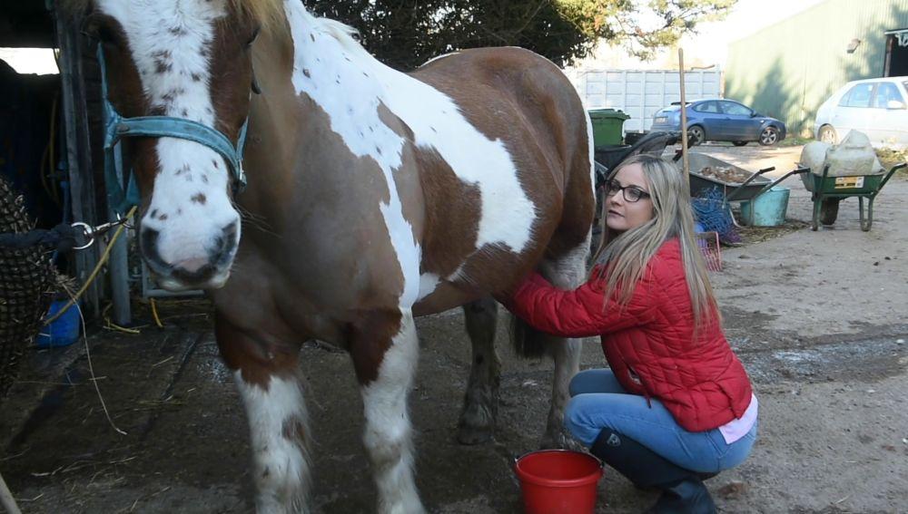Mercedes Hoblin limpiando a un caballo