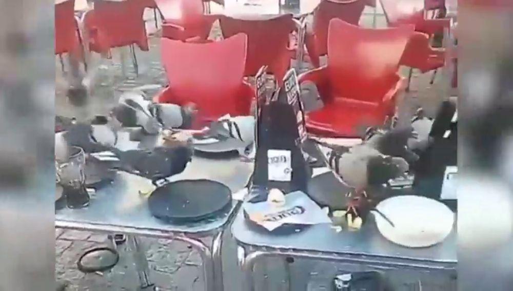 Las palomas de adueñan del centro de Cádiz y los hosteleros piden una solución al Ayuntamiento