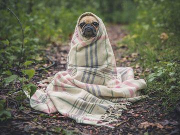 Cachorro entre mantas