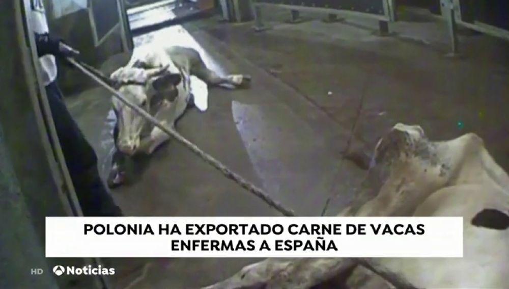 La carne contaminada de Polonia ha llegado a Madrid, Baleares y País Vasco