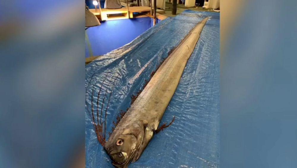 Alerta en Japón: Hallan dos peces muertos que, según las leyendas, presagian la llegada de un tsunami