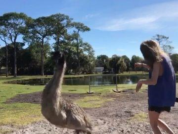 Cisne ataca a una mujer
