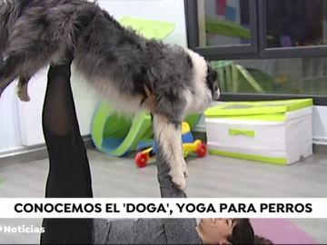 Llega a España el 'doga', una forma de practicar yoga con tu perro