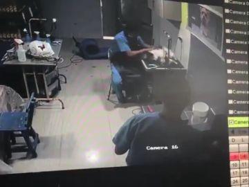 Maltrato a un perro en Colombia