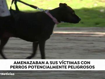 REEMPLAZO Detenidas dos personas en Madrid que utilizaban perros de caza para robar e intimidar a sus víctimas