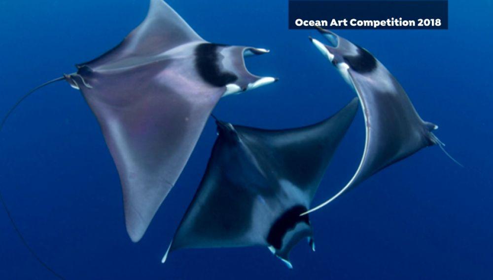 Las fotografías ganadoras del 'Ocean Art'