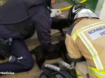 Bomberos y policía reaniman a media docena de gatos intoxicados en un incendio