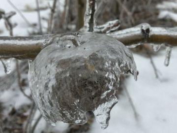 Imagen de una manzana congelada