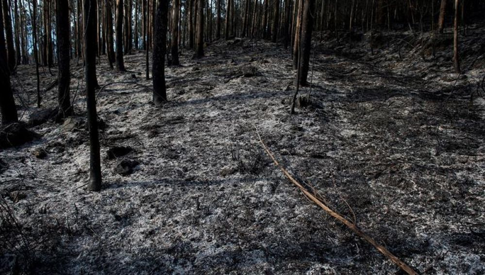 Un monte quemado tras los incendios de Cantabria