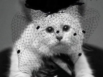 La gata de Karl Lagerfeld