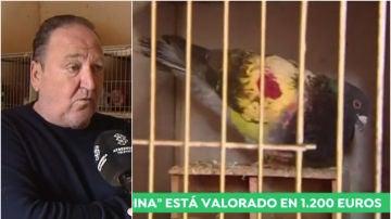 Marcos López, dueño del palomo 'Sardina'