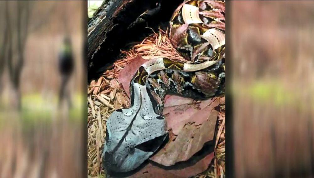 Confirman que es falsa la alarma por la presencia de una peligrosa víbora en Hondarribia