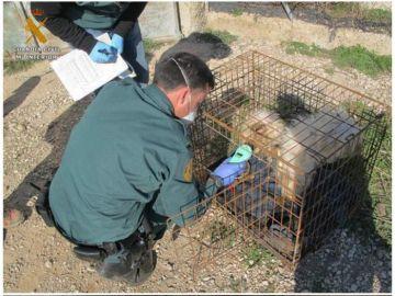 Cinco perros muertos y siete en malas condiciones en Burgos