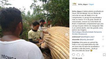 Ballena en el Amazonas