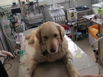 Bobby, el cachorro torturado en Corea del Sur
