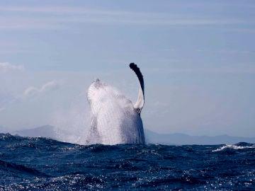 Ballena en el océano