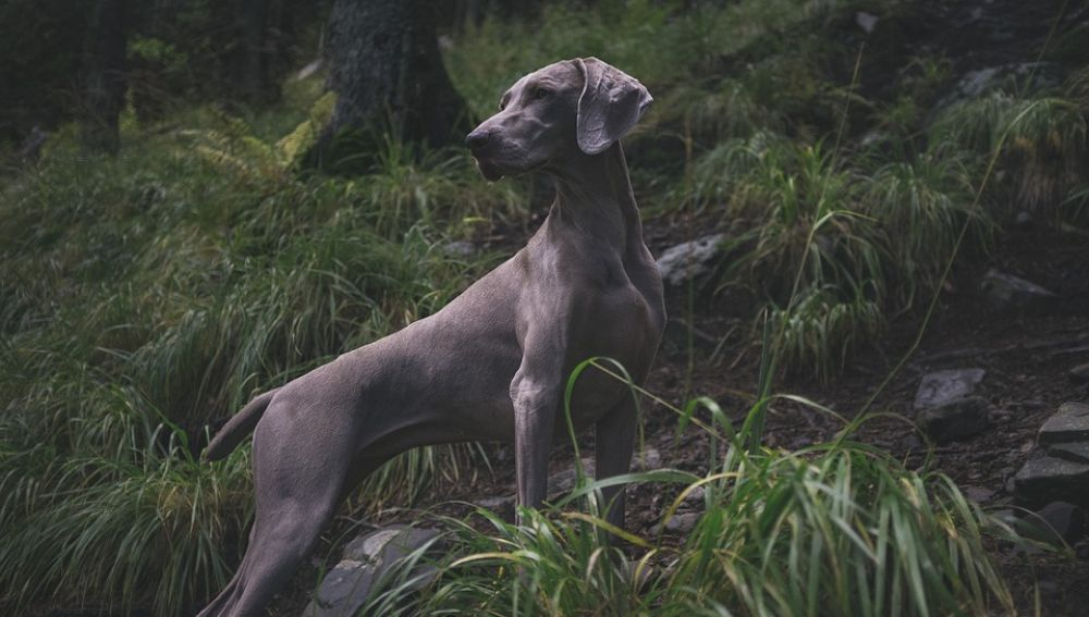 Perro (Archivo)