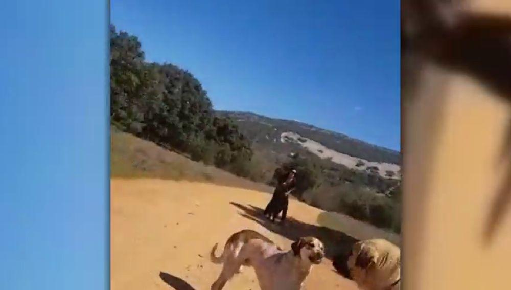 Un mastín ataca a un perro y a su dueña en Cabañeros, Ciudad Real