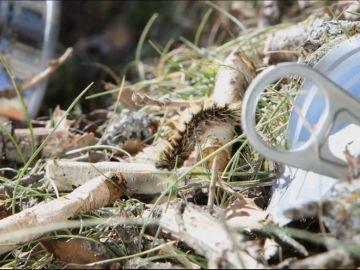 Imagen de una oruga caminando al lado de una lata tirada