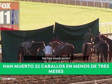 caballos muertos antena 3