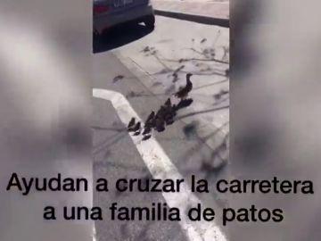 Vecinos y policías ayudan a una familia de patos a cruzar una carretera