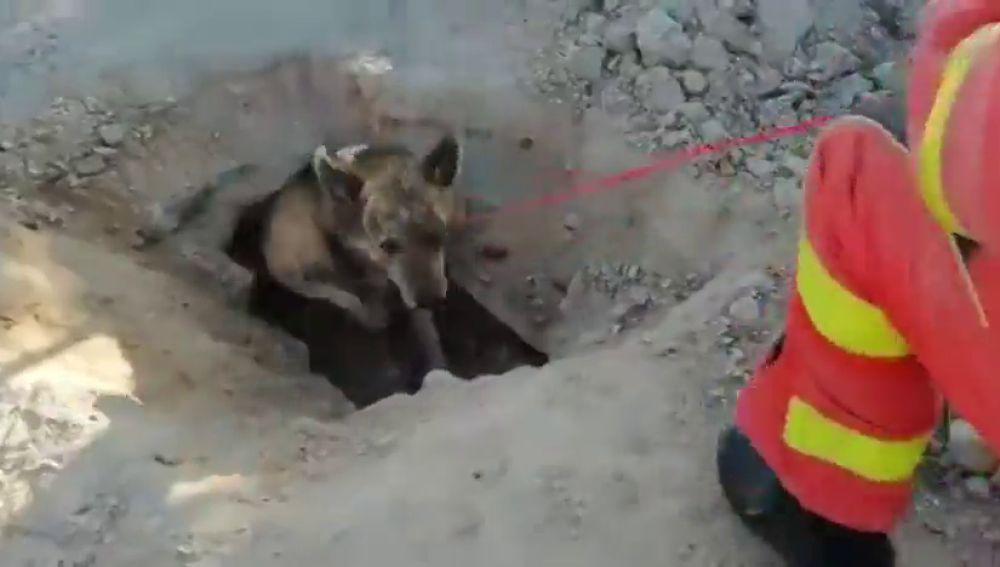 Perro atrapado en Valencia