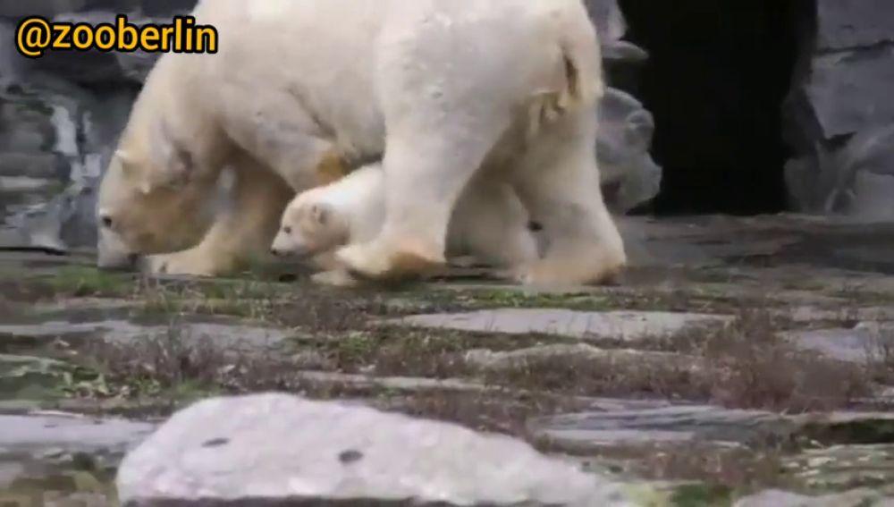 Fluffy: la nueva cría de oso polar nacida en el zoológico de Berlín