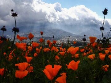 Amapolas en flor en Cañón Walker, en California