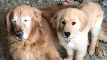 Charlie y Maverick, la pareja de perros viral en las redes sociales