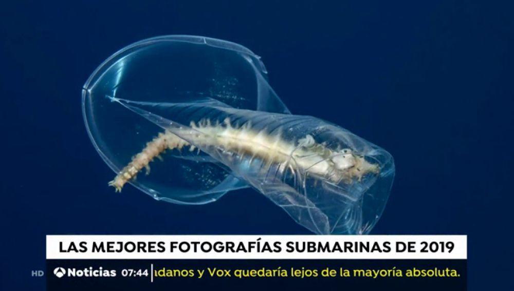 Las mejores fotografías submarinas de 2019