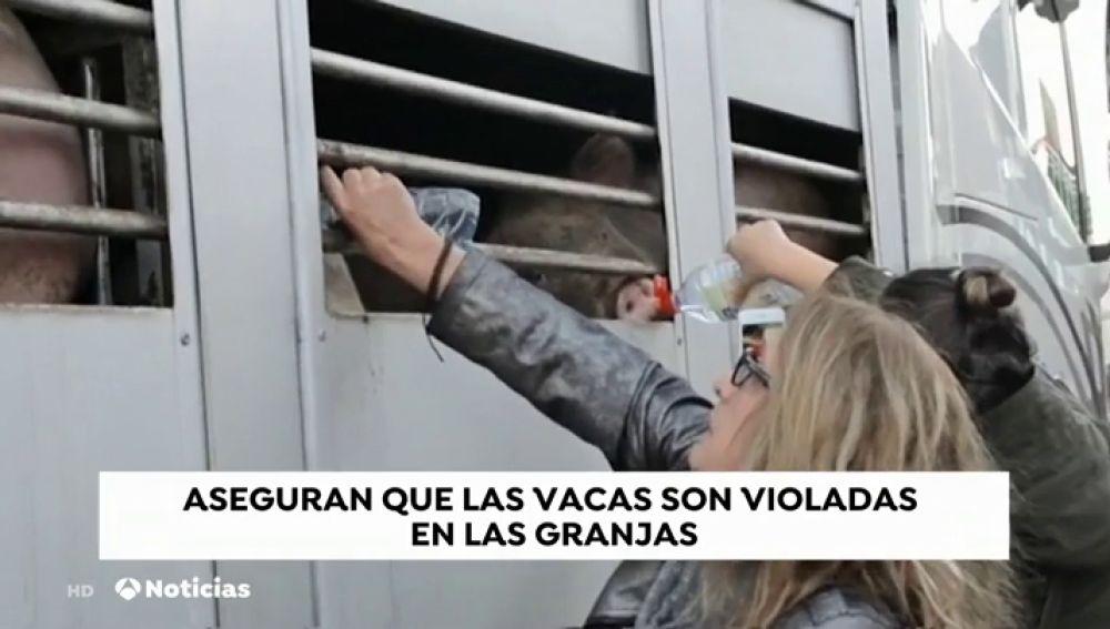 REEMPLAZO Una ONG denuncia las agresiones a animales hembras